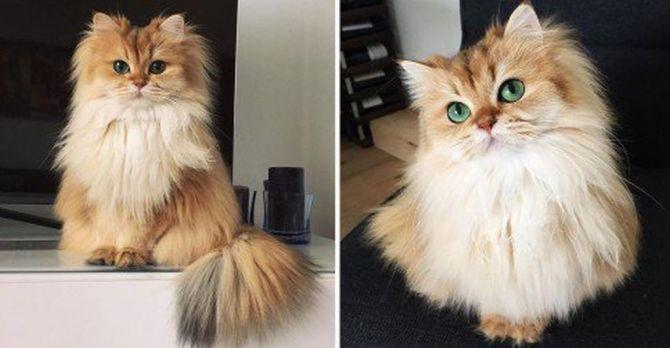 gato1.jpg